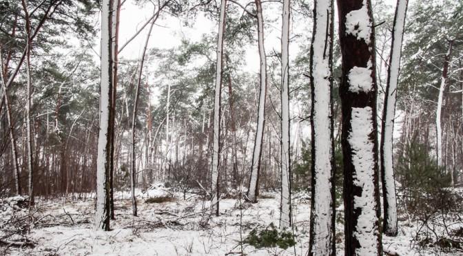 bijltjesdag voor bomen